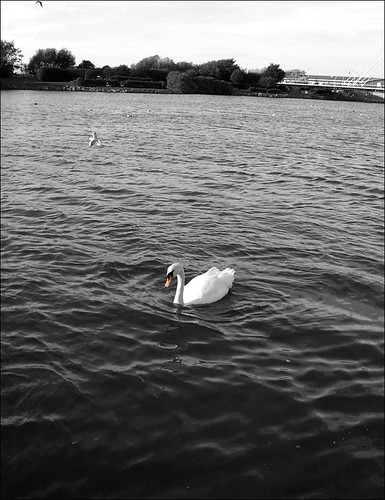 Swan, Southport
