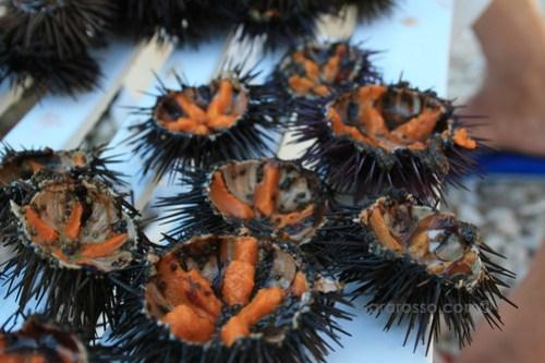Ricci di Mare - Sea Urchins