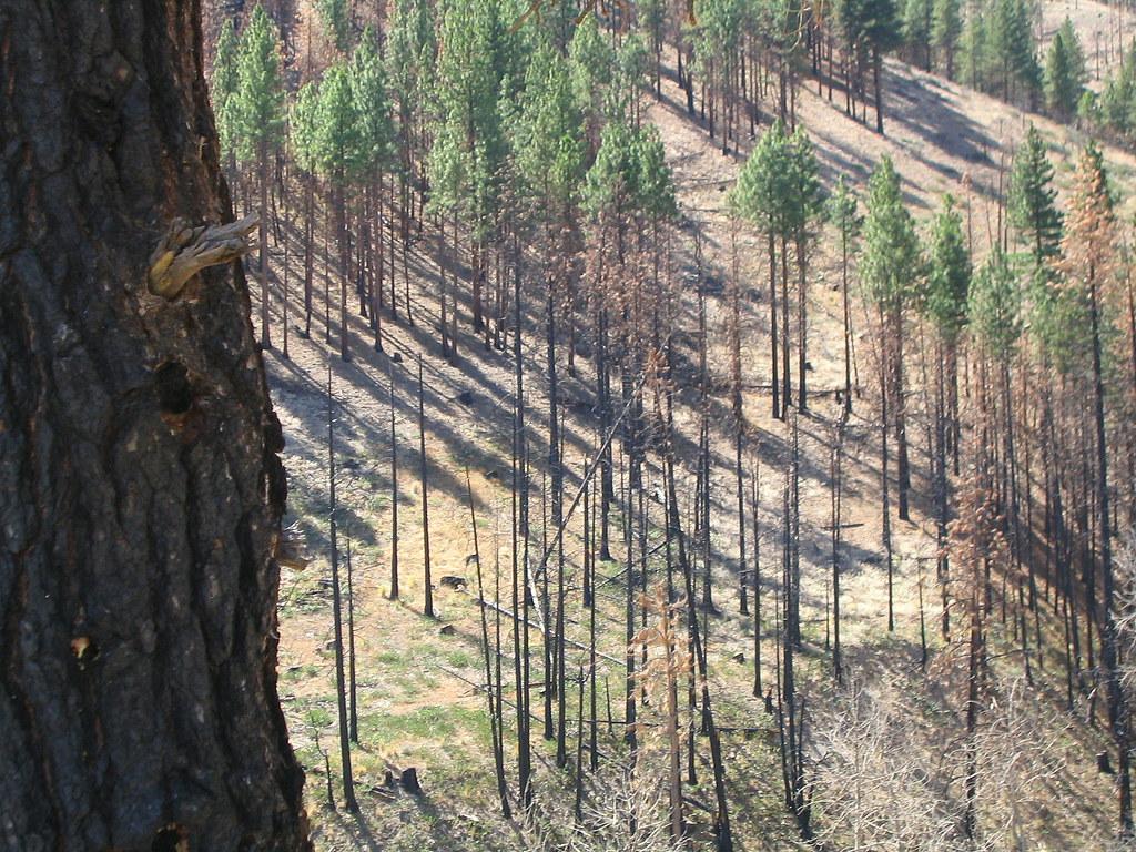 Falling Trees