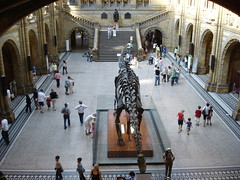Natural History Museum (15)