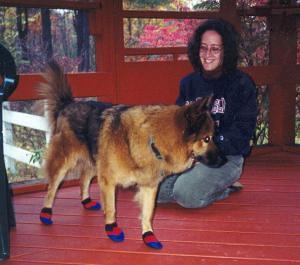 Reggie in boots, Hillsboro, NH