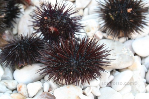 Ricci di Mare - Sea Urchins ready to be Eaten
