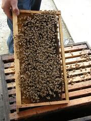 58.蜂巢