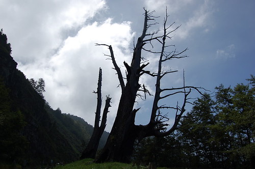 Fuci Tree