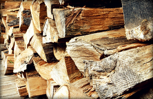 All along the woodpile