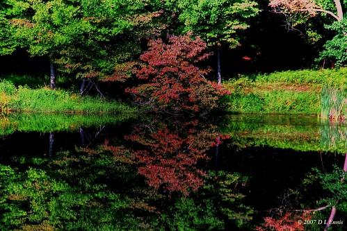 Reflect the Dogwood