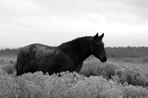 NM Wild Horses nwm (44)