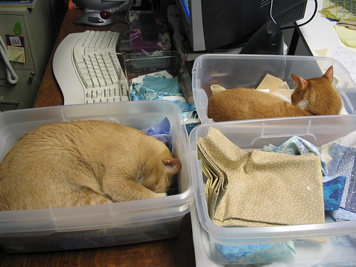 Cats Helping