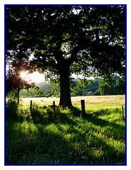 Sunlight Throught Trees