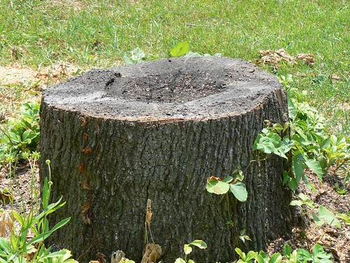 stump after day 1