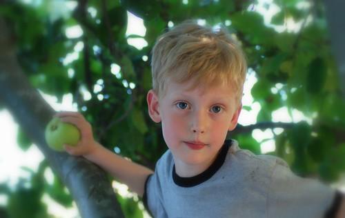 b in tree.jpg