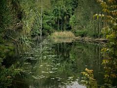 Australian Plant Communities' Lagoon