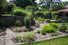 The Native Plant Garden