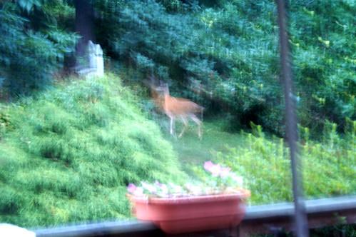 deer mom