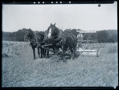 Horse Drawn Harvesting