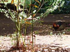Allerton Garden chicken