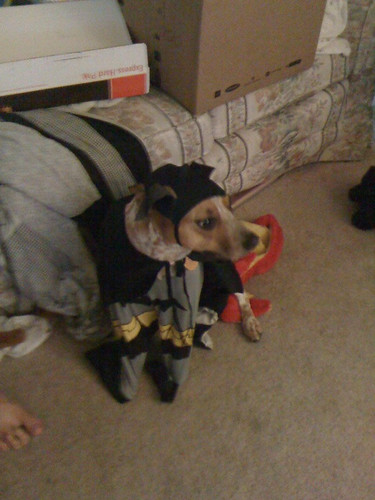 peanuttiest dog named after a batman villain masquerading as a batman