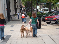 Urban Hounds and their Downtown Momma heading home...