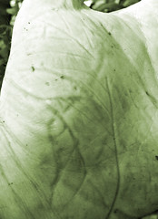 leaf hand