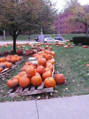 2nd Presbyterian Pumpkin Patch Pittsburgh, PA