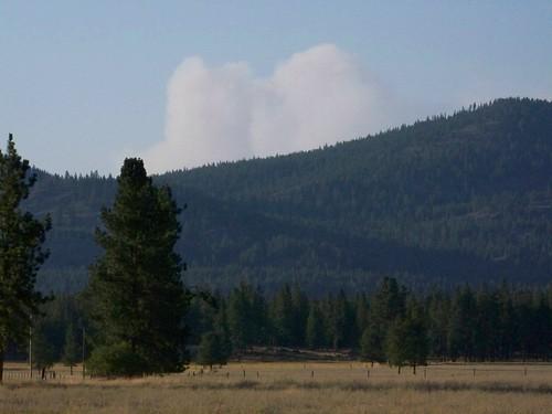 Forest fire smoke column