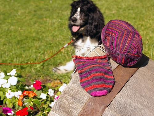 Duncan&Socks