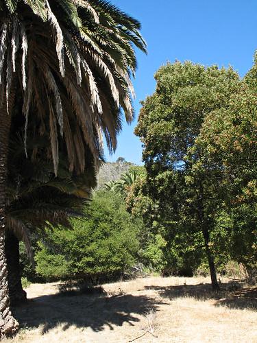 palms at the belgum sanitarium, richmond
