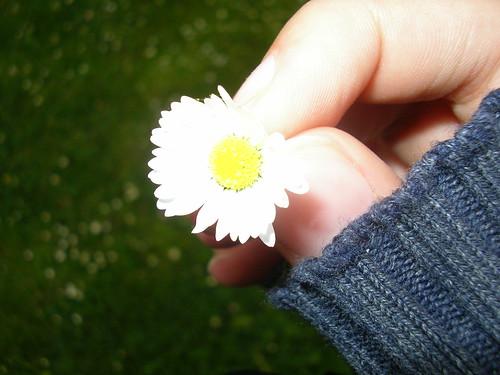 bloemke