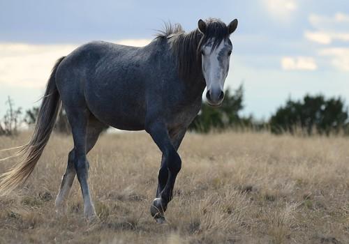 NM Wild Horses nwm (15)