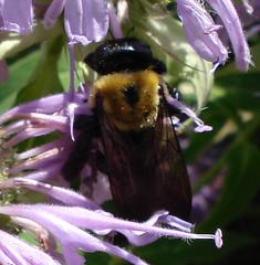 2007-08-11 DSC01445_crop