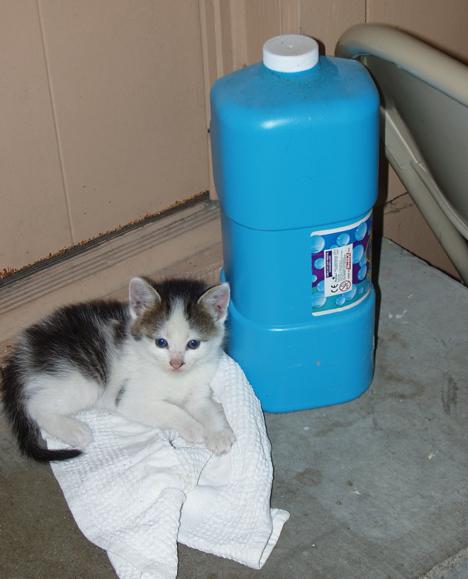 Kitten & Bubbles