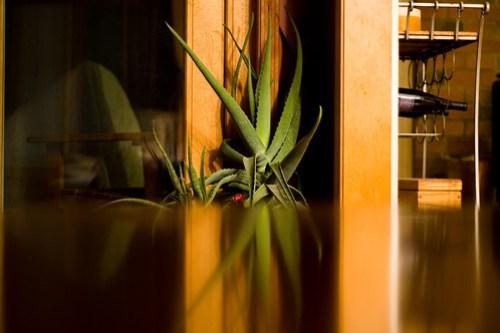Aloe Reflect