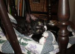kitten smoosh