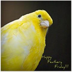 Happy Feathery Friday!