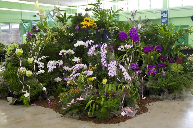 Aiea Orchid Club Display (2010 HOS Show)