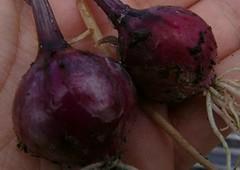 purplette