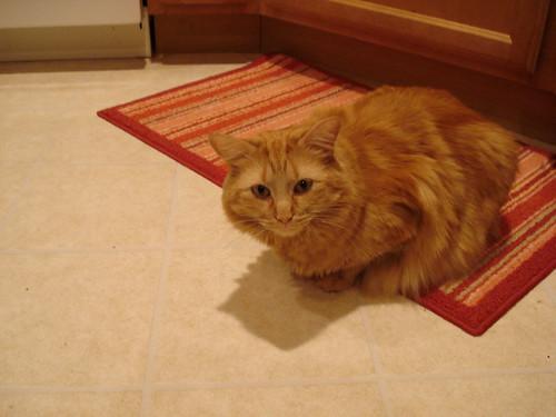 Simon in the Kitchen