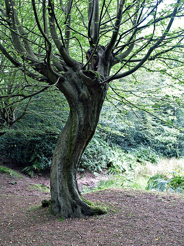 slinky-dress twirling tree