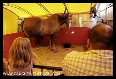 Mont. County Fair  _MG_4960.jpg