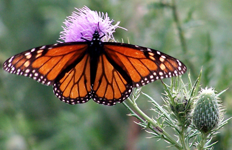 Open Monarch