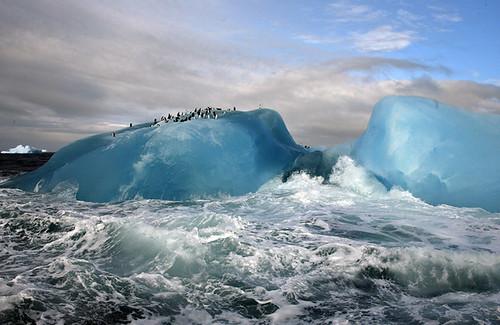 pinguinos en la antartida