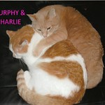 MURPHY & CHARLIE