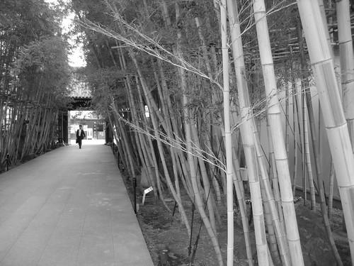 Bambou gaienmae_1