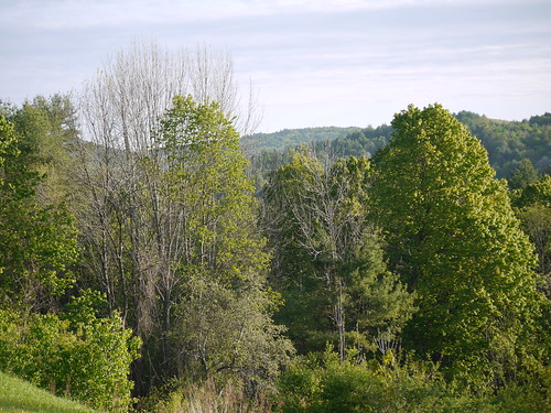 Spring morning view