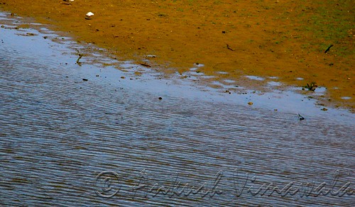 Lines of Tide