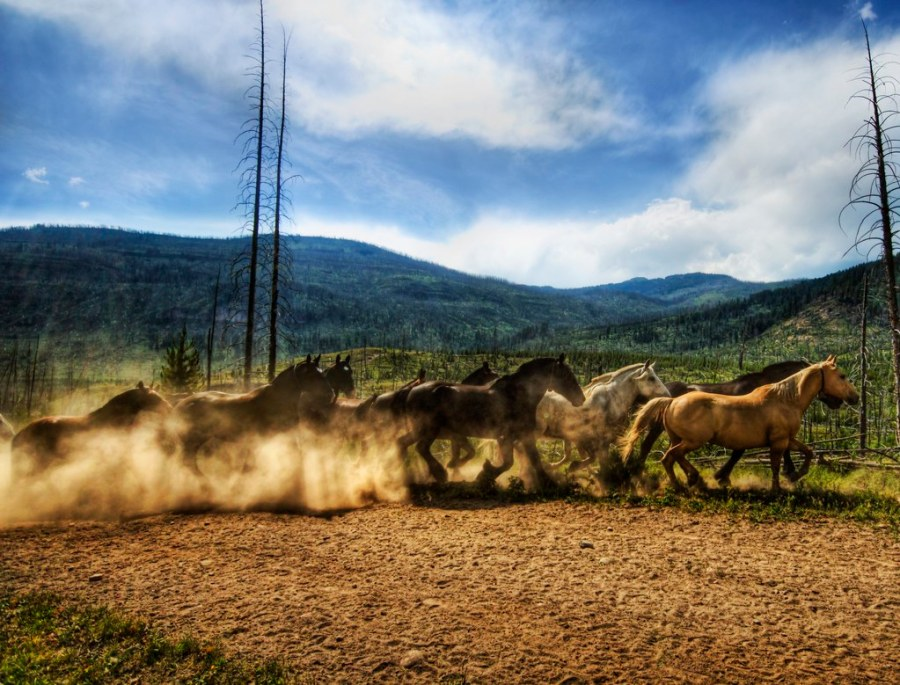 Stampede of the Wild Horses