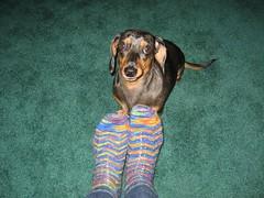 Carolina Socks