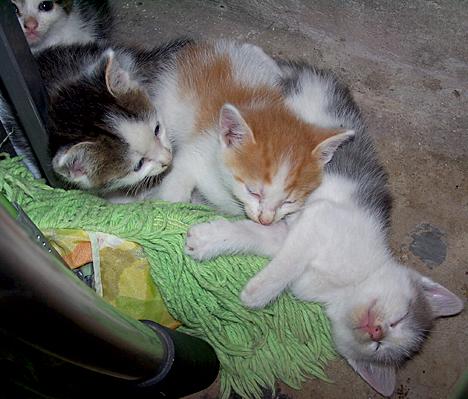 Sleeping ... Sorta