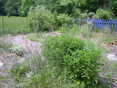 perennial bed before