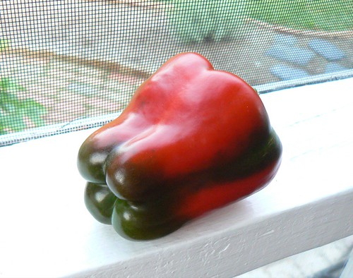 Buran Sweet Pepper